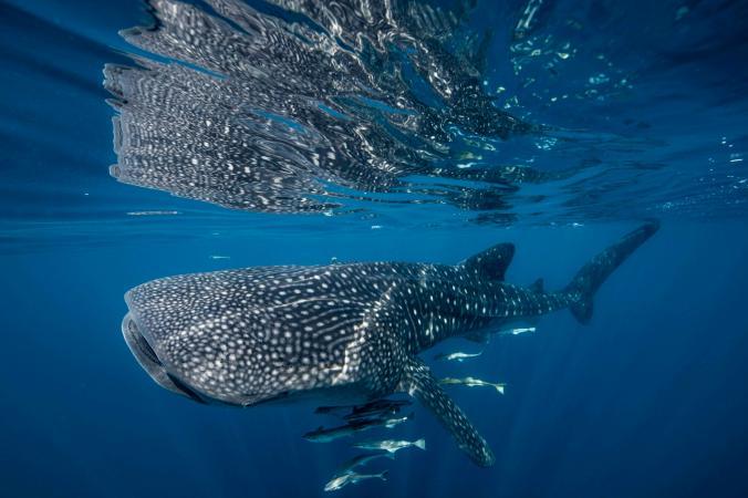 عکسهای بینظیر از دنیای زیر آب