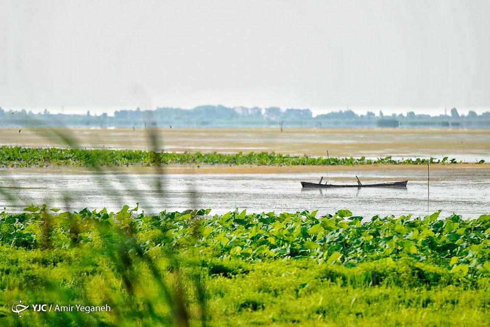 عکسهای دیدنی از تالاب انزلی