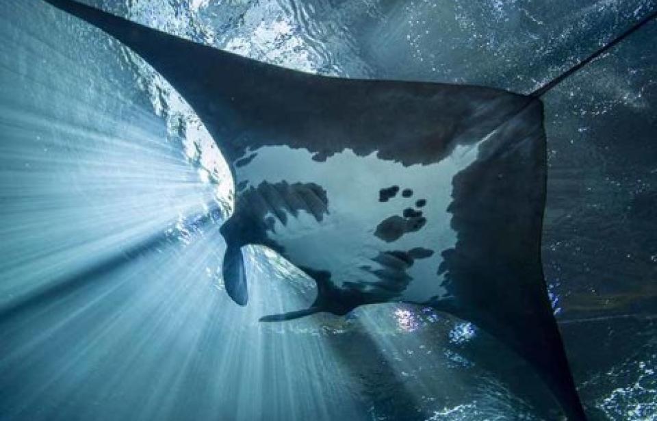 تصاویر بینظیر از بزرگترین آکواریوم جهان