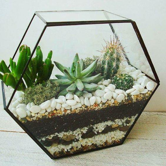 چه گلها و گیاهانی را برای نگهداری در آپارتمان بخریم؟