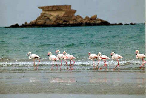 جزایر ناز در جزیره قشم