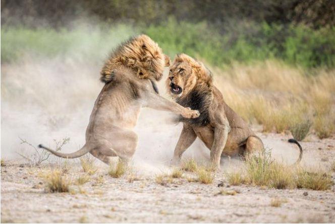 عکسهای برتر از حیات وحش