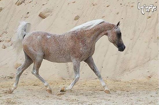 ببینید: زیباترین اسبهای جهان