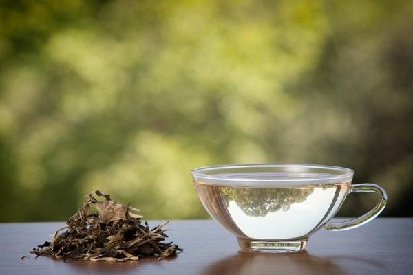 چای سفید چیست و چه خاصیتهایی دارد؟