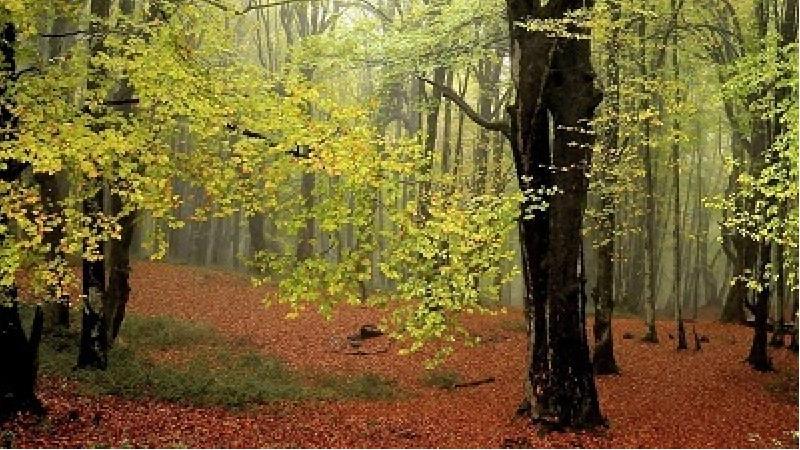 لذت قدم زدن در جنگل الیمستان را از دست ندهید