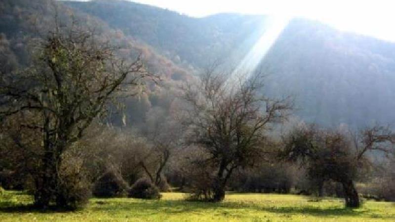 از زیبایی های جنگل الیمستان لذت ببرید