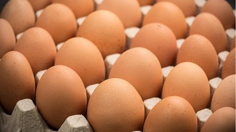 تخم مرغ برای تامین ویتامین دی بدن مفید است