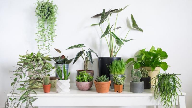 روش جلوگیری از خشک شدن گل های آپارتمانی