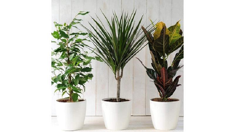 گیاهان آپارتمانی به چه مراقبت هایی در زمستان نیاز دارند