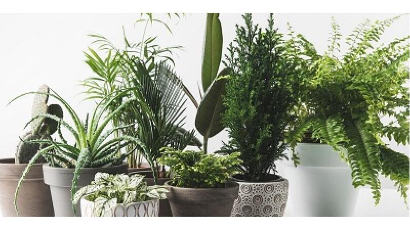برای نگهداری از گیاهان آپارتمانی در زمستان چه کار باید انجام بدهیم