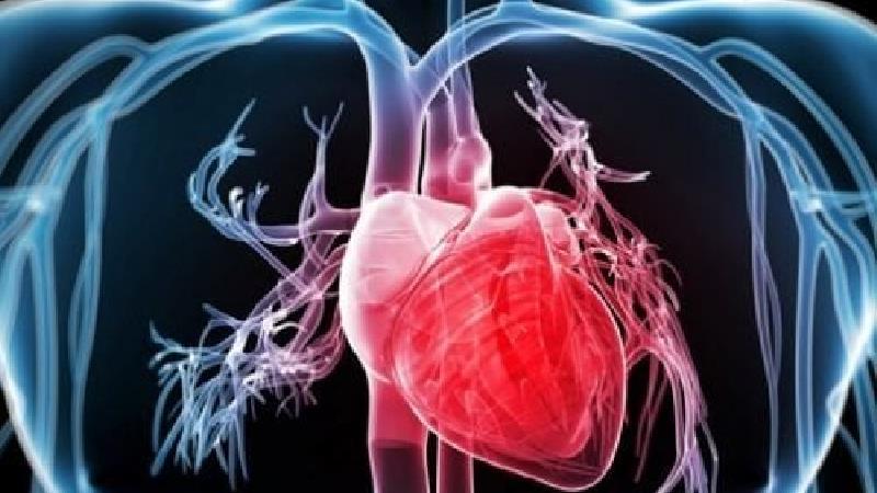 چگونه می توان با طب سنتی از ضعف قلب پیشگیری کرد