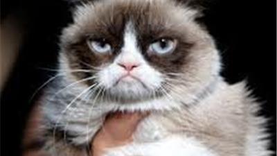 مرگ گربهای که در شبکههای اجتماعی 12.4 میلیون فالوور داشت