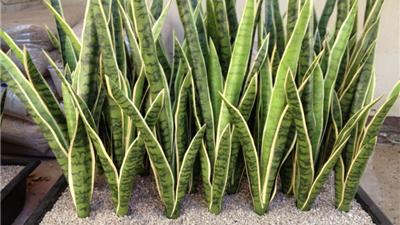 معرفی بهترین و زیباترین گیاهان برای نگهداری در آپارتمان
