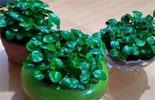 سبزه با دانه پرتقال یا نارنج را میتوانید به جای سبزه با بذر استفاده کنید