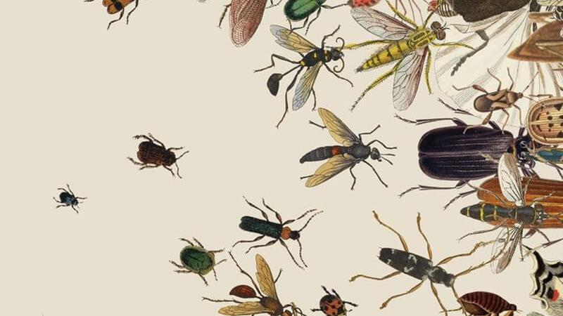 نقش حشرات در انتقال ویروس کرونا