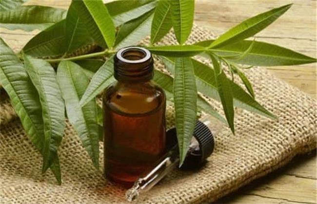 روغن درخت چای برای موهای چرب مفید است