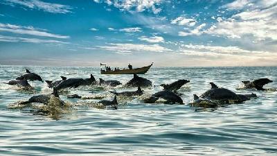 دلفینها در جزیره هنگام