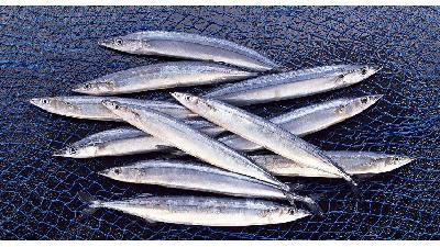 دستور پخت کامل ماهی کیلکا