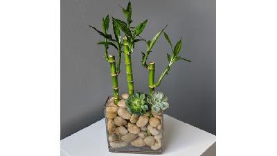 راهنمای کامل نگهداری از گیاه بامبو در آپارتمان