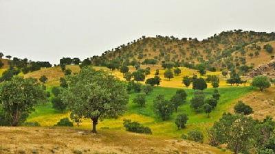 دشت هلن در استان چهار محال و بختیاری واقع شده است