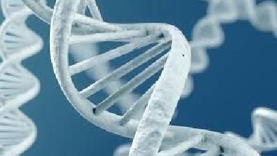بررسی ازدواج های فامیلی از نظر علم ژنتیک