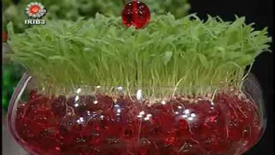 چگونه در خاک ژله ای سبزه بکاریم