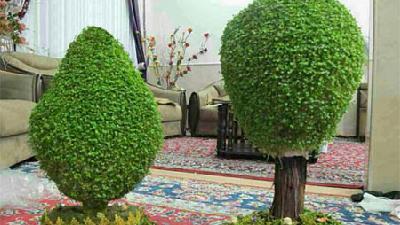 نحوه درست کردن سبزه درختی