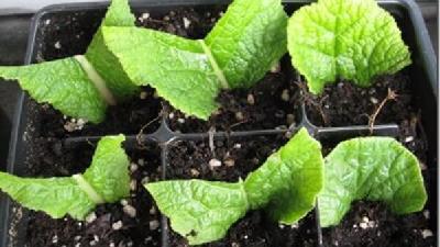 چگونه گیاهان را قلمه بزنیم