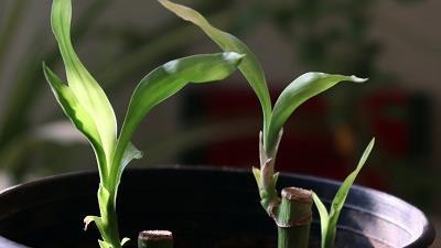 روش های مختلف قلمه زدن گیاهان