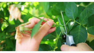 قلمه زدن گیاهان را یاد بگیرید