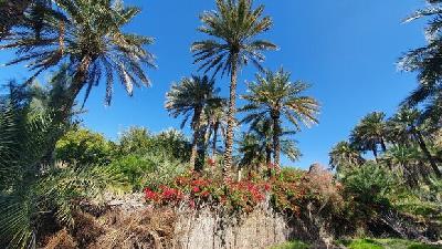 باغ های روستای کشیت قلعه گنج