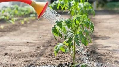کدام قسمت خانه برای کاشت گیاه مناسب است