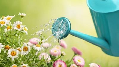 در اواقت فراغت سراغ گل و گیاه بروید