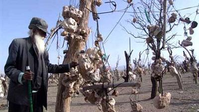 باغ سنگی درویش خان چه تاریخچه ای دارد