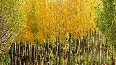 سوکهریز منطقه ای چهار فصل است