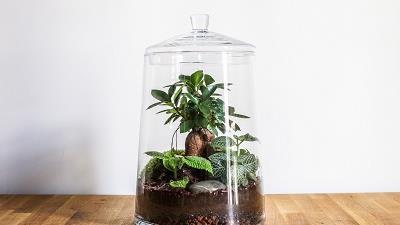 تراریوم برای چه گیاهانی مناسب است