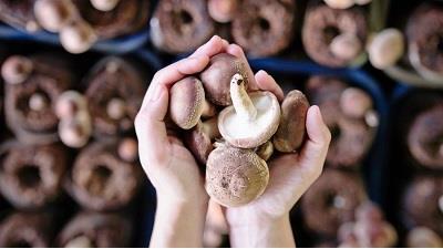 نگهداری قارچ در فریزر چگونه باید باشد