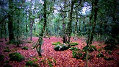 جنگل سیسنگان پوشش گیاهی متنوعی دارد