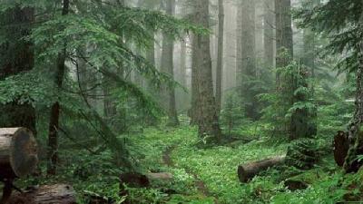 در جنگل سیسنگان خاطرات خوشی برای شما رقم خواهد خورد