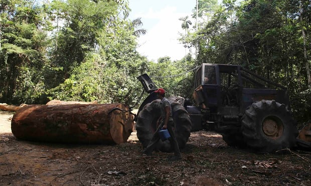 سهلانگاری دولت برزیل در از بین بردن جنگلهای آمازون
