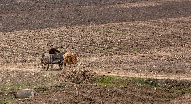 هشدار سازمان ملل درباره خشکسالی بی سابقه در کره شمالی