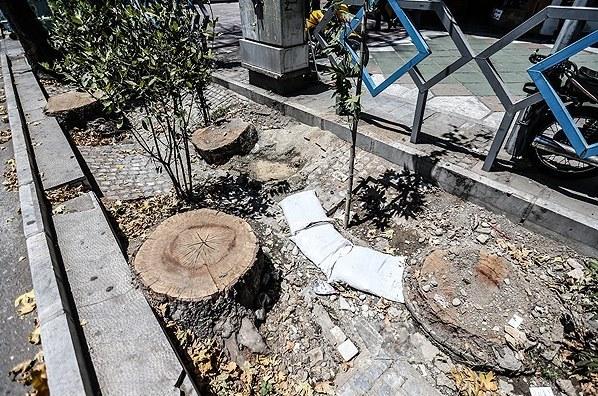 شهرداری درباره قطع درختان خیابان ولیعصر توضیح دهد
