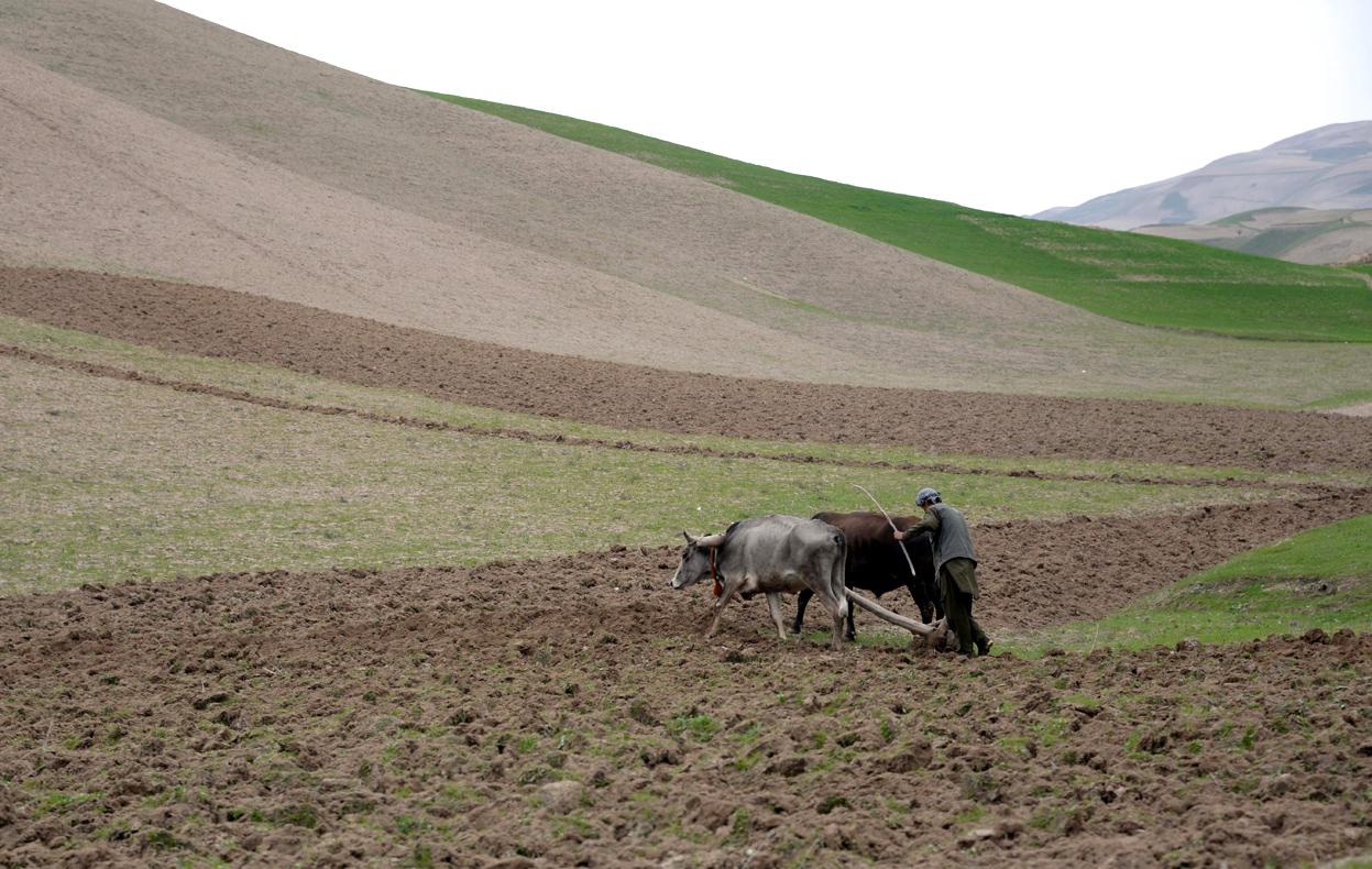 روزهای بیرونق کشاورزی در افغانستان