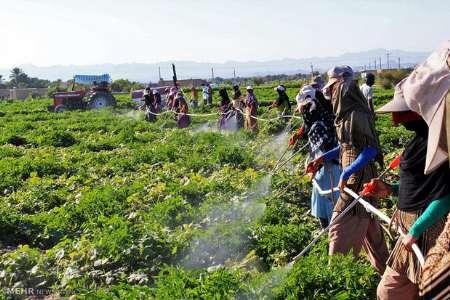 زمینهای کشاورزی برای ردیابی سموم شناسنامهدار میشوند