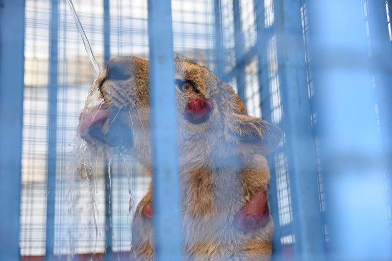 فیلم/ نجات حیوانات باغوحش حلب