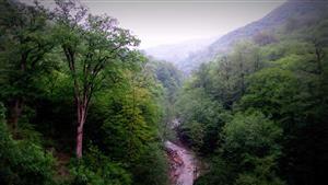 ثبت جهانی جنگلهای هیرکانی به نام ایران