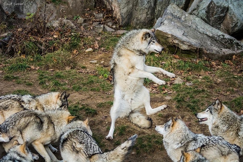 عکاسی خندهدار از حیوانات