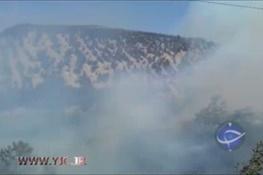 فیلم/ آتشسوزی گسترده در جنگلهای نوشهر