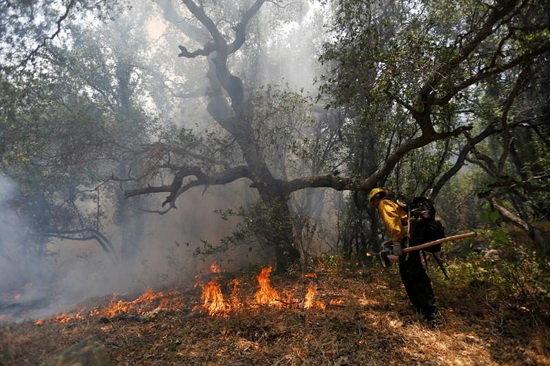 ردپای زمینخواران در آتشسوزیهای پناهگاه حیاتوحش در مازندران