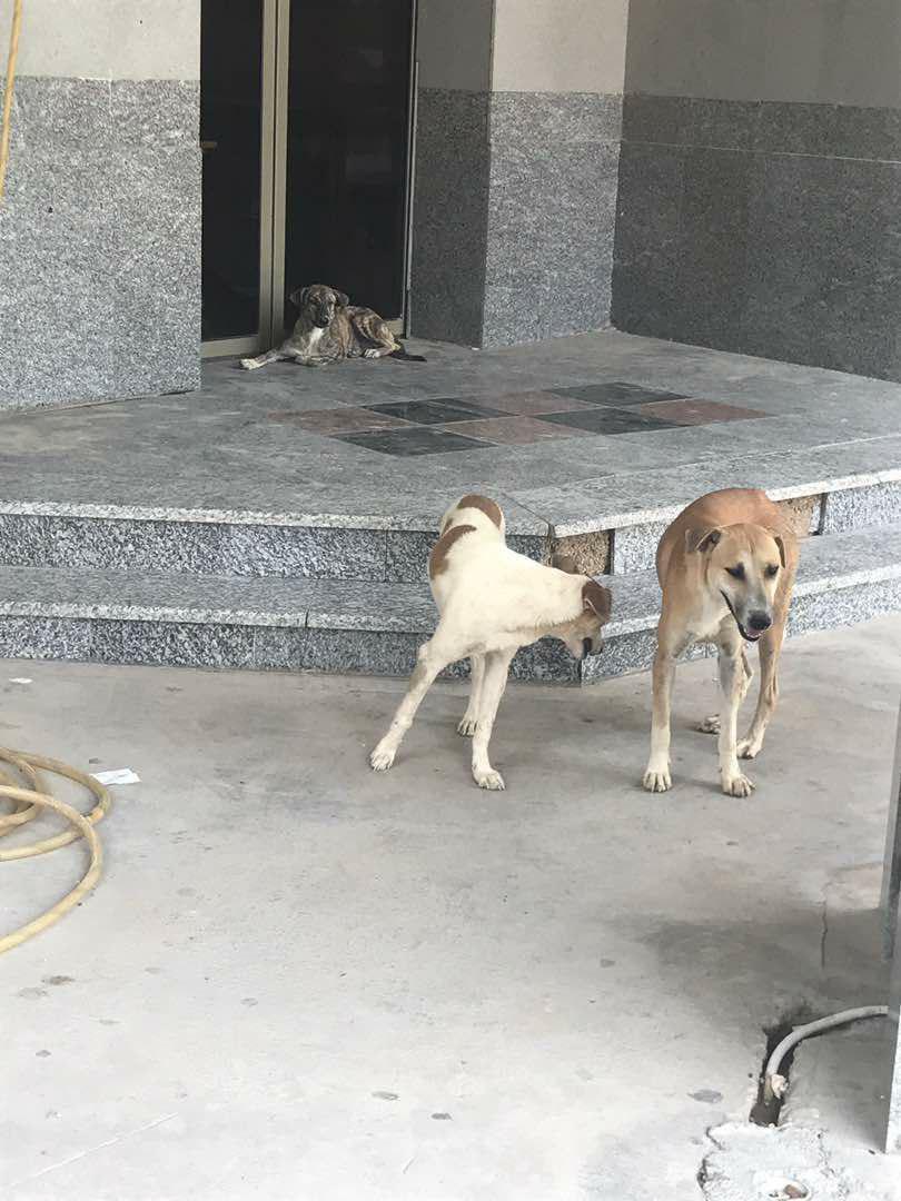 پرسه سگهای ولگرد در بیمارستان بوشهر!